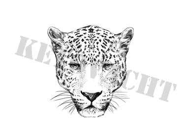 drawing of a leopard head