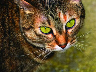 Cats At Home Feline Hospital