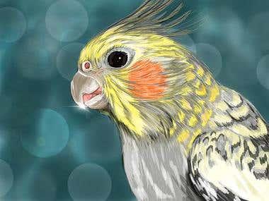 Illustration Corella parrot