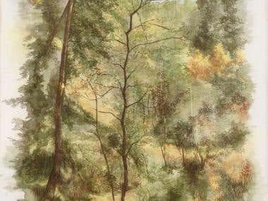 Aquarelle painting of an old forest.