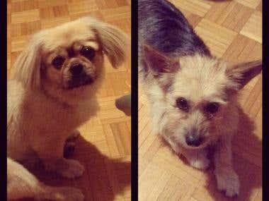 My barking assistants :)