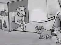 KM Dog Cube Whiteboard Animation