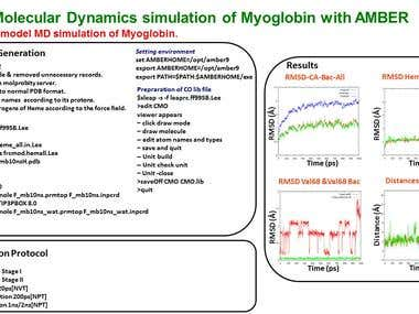 Molecular Dynamics Simulation of Myoglobin with AMBER