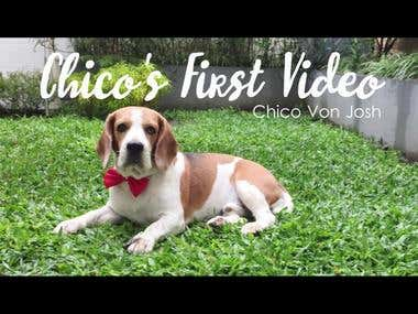 "A dog profile ( It's my dog called ""Chico"")"