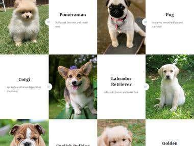Puppies4everyone's Site - https://puppies4everyone.wordpress