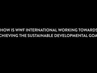 Interview with Director General of WWF International