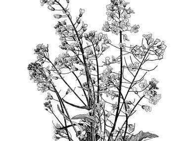 rapeseed flowers buket
