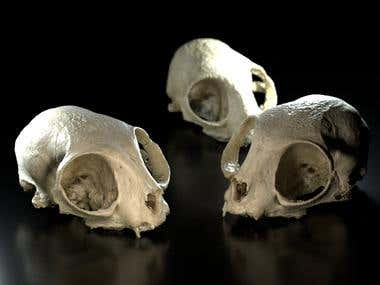 Photo to 3D - Cat Skull