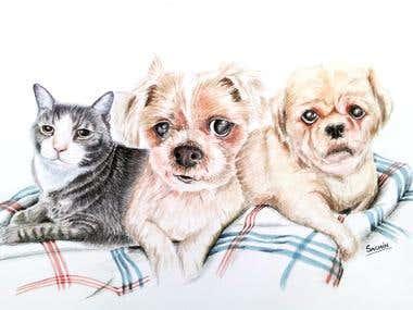 Paintings of three pets