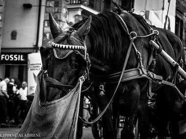 Horse In Florence