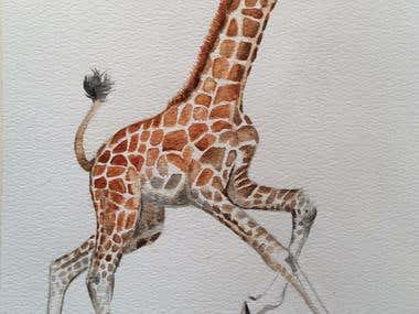 Illustration of Baby Giraffe