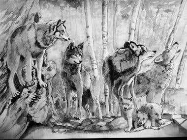 Illustrations of wildlife