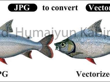 Jpg picture to convert Vector file.