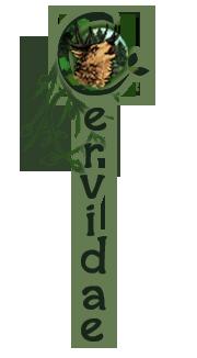 Cervidae Vertical Banner