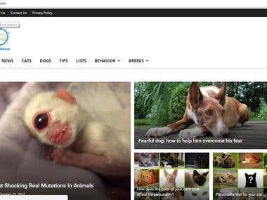 blog type site errors fixing