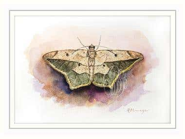 Scientific & Natural History Illustration