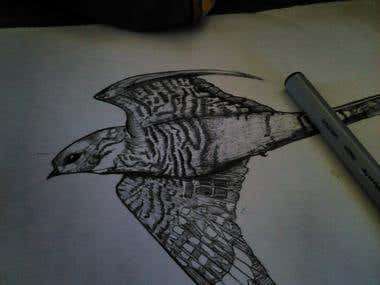 Hand Drawn Night Hawk