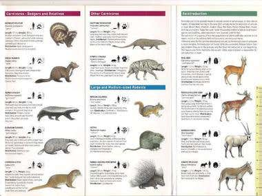 Booklet Field Animals Drawing Guide