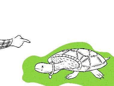 Wag Words Tortoise