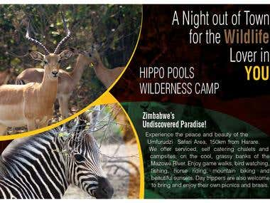HIPPO POOLS Flyer
