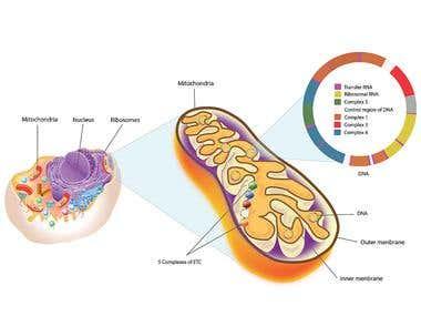 Scientific Diagrams & illustrations
