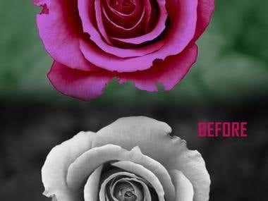 Photo-Retouching(Black&White to Color)