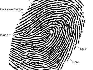 Fingerprint Identification Algorithm