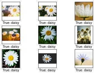 Machine Learning - Image Recognition on Flower Dataset
