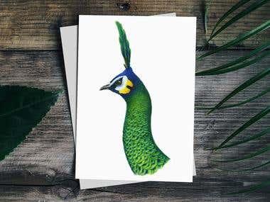 Green Peacock | Pavo muticus