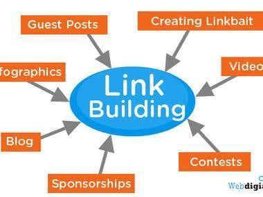 SEO & Link Building