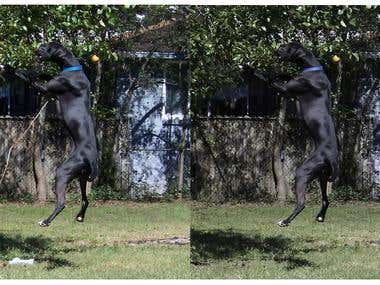 Jumping dog before and after