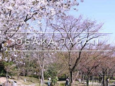 Osaka Cherry Blossoms travel video (Thocrety)