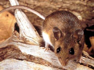 Ideal pest control solutions