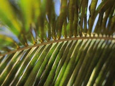Fotografía de naturaleza para el Jardín Botánico de Mcbo