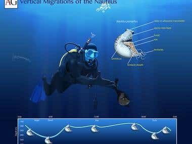 Vertical Migrations of the Nautilus.