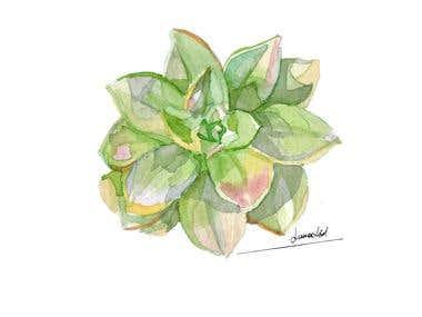 botanical/animals illustrations