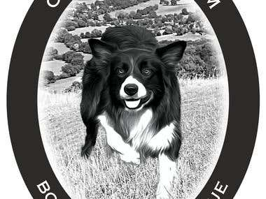 T-shirt design for Border Collie Rescue Group
