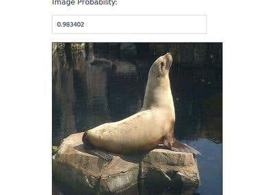 Image Recognition System (Web based)