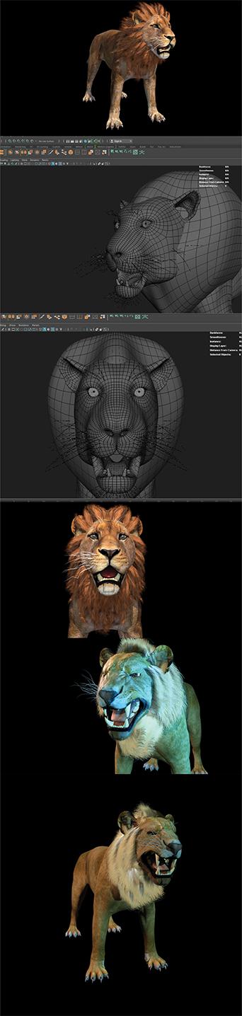 Lion Modelling