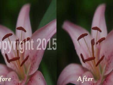 Watermarks Removal