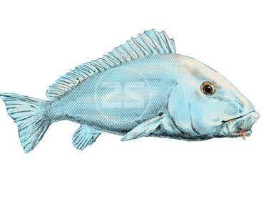 Blue Bastard fish