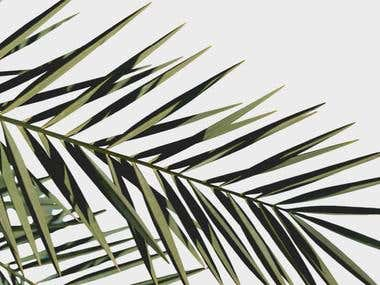 Palms prints