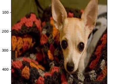 Dog Image Classifier