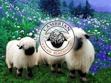 Logo for Cambrian Valais Blacknose sheep farm