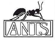 Wise like ants