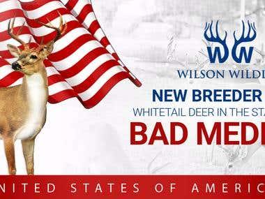 Whitetail deer Breeder Buck ad design