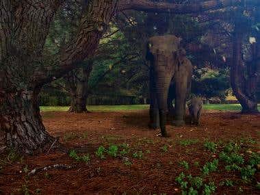 Elephants in Regents Park