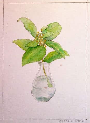 Osmanthus insert bottle(Illustration)