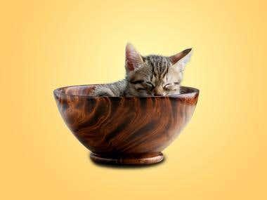 Pet photo retouching