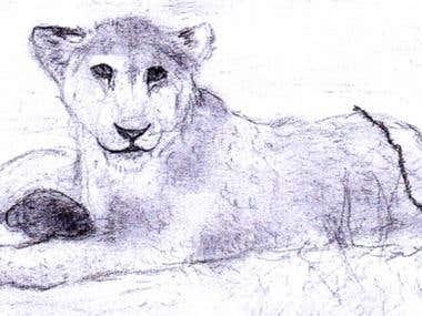 Lion Cub Sketch